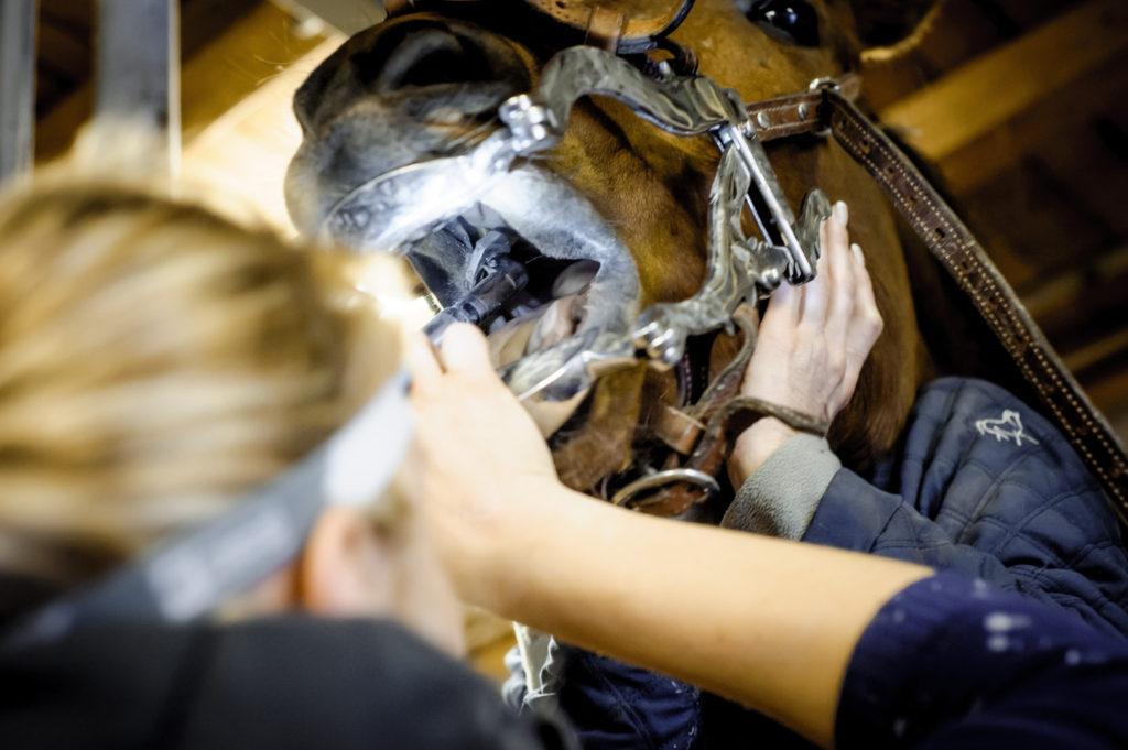Proč potřebuje kůň úpravu zubů